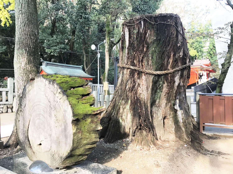 戦災から復活した樹齢500年の楠のご神木