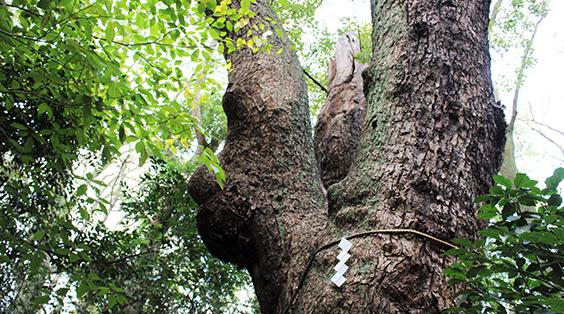生田神社 森に残る伝説と意外な参拝スポット