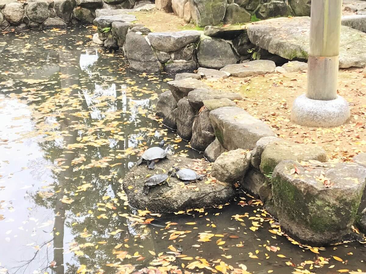 水神社にいた亀を奉納していたのが始まり