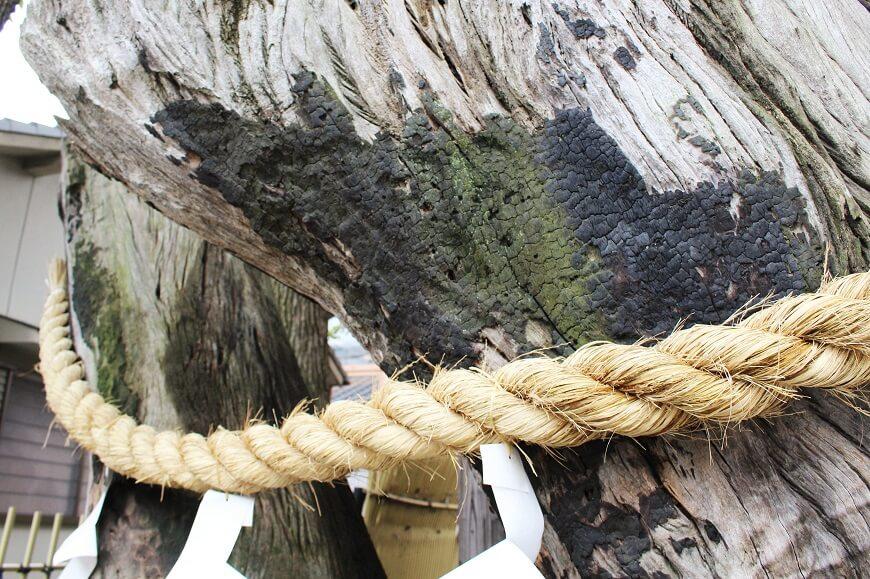 戦火の傷痕が残る御神木は「再出発の木」と言われている