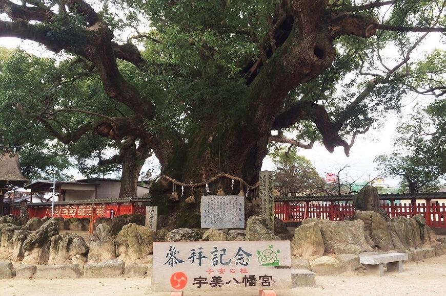宇美八幡宮の御神木「湯蓋の森」