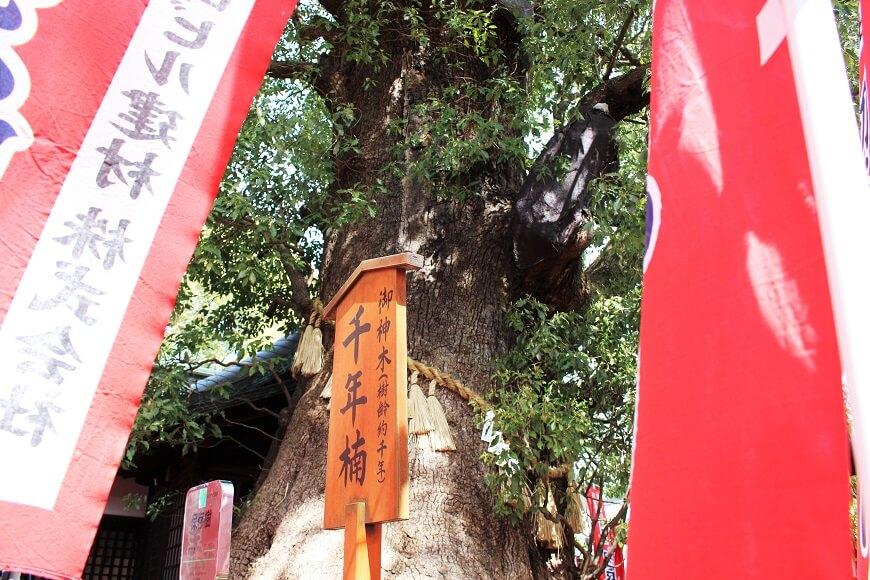 社殿奥にある樹齢1000年の楠の木が御神体