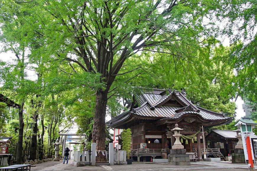 田無神社の御社殿と御神木