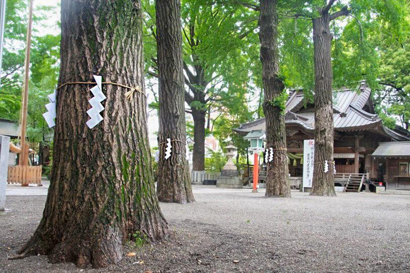 田無神社の御神木