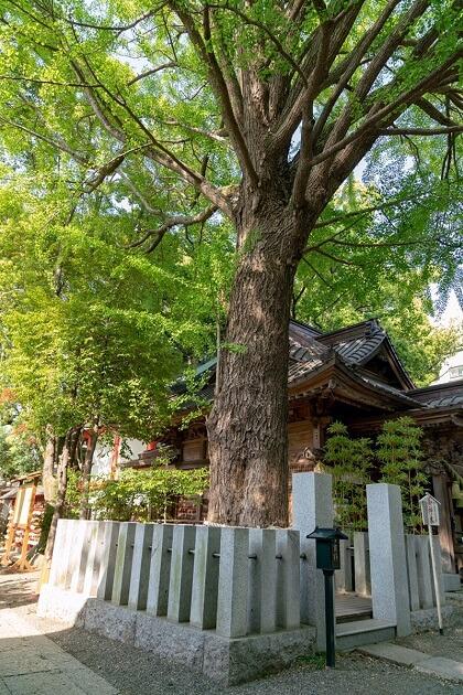 田無神社の一番大きい御神木