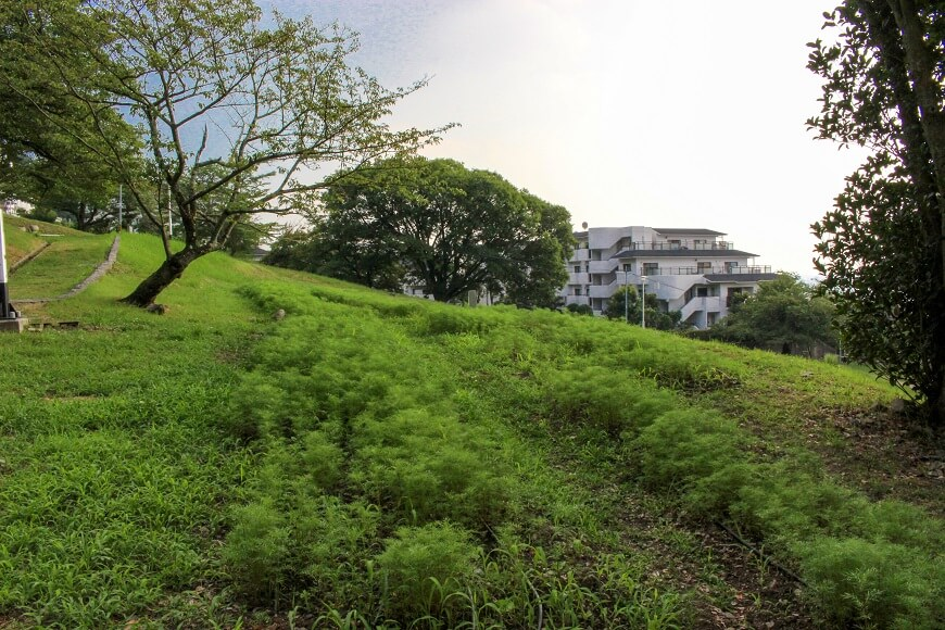 枚岡神社は「梅の名所」としても知られている