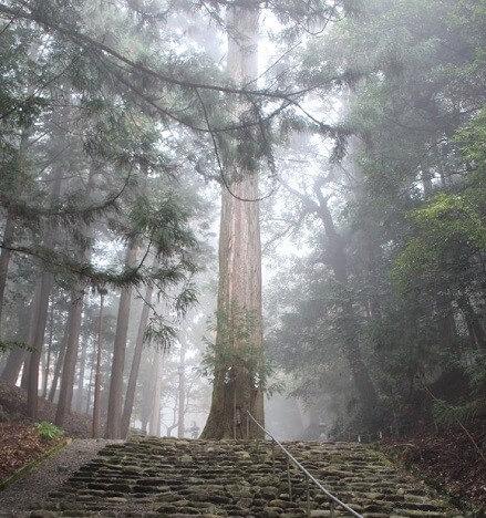 元伊勢内宮皇大神社の御神木