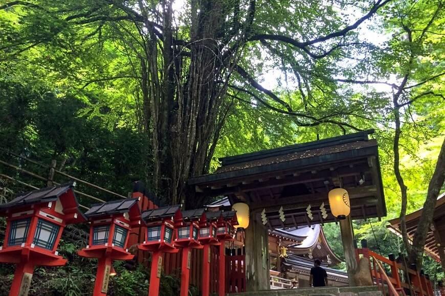 貴船神社の桂の御神木