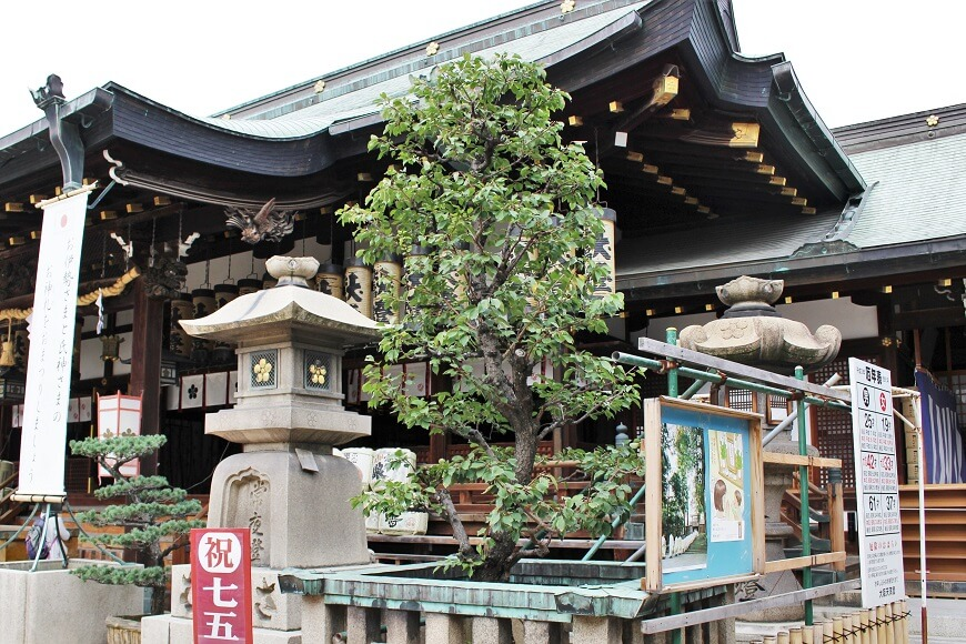 御拝殿の前にある梅の木の御神木