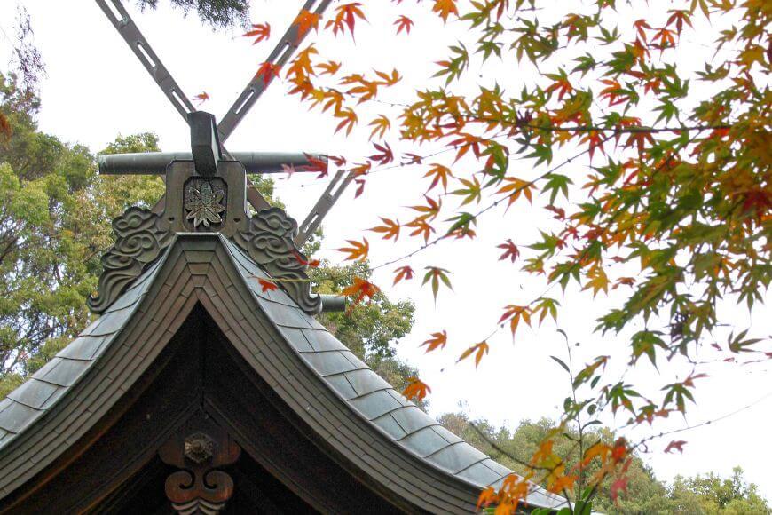 八重の楓の御神紋と紅葉時期の楓